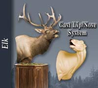 Elk - Cast Lip - Nose