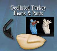 Ocellated Turkey Heads - Parts