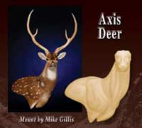 Axis Deer Shoulder Mannikins