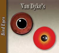 Van Dyke's Bird Eyes