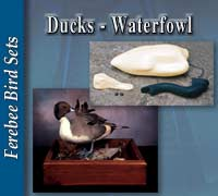 Ducks - Waterfowl Sets