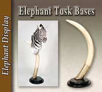 Elephant Tusk Base