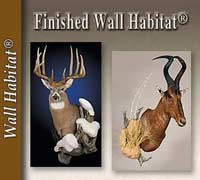 Finished Wall Habitat®