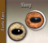 Sheep Eyes