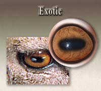 Exotic Mammal Eyes