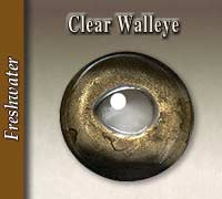 Walleye - Clear Pupil