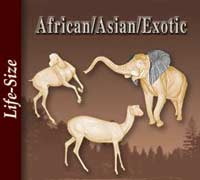 African - Asian - Exotic Life-Size
