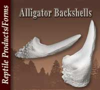 Alligator Back Shells