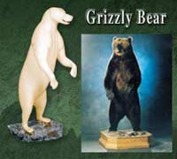 Grizzly Bear - Brown Bear
