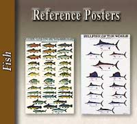 Fish Reference Posters