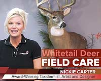 Whitetail Deer Field Care for Taxidermy