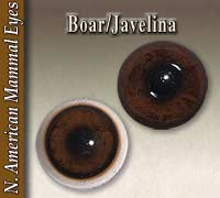 Boar - Javelina Eyes