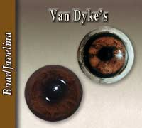 Van Dyke's Boar Eyes