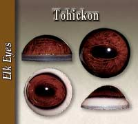 Tohickon Eyes