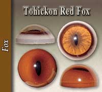 Tohickon Red Fox Eyes