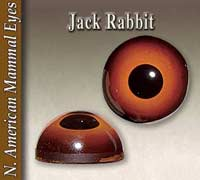 Jackrabbit Eyes