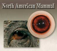 North American Mammal Eyes