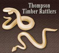Thompson Timber Rattler