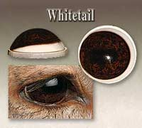 Whitetail Deer Glass Eyes