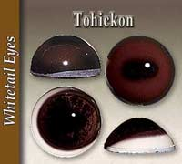 Tohickon Deer Eyes
