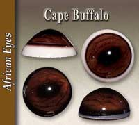 Cape Buffalo Glass Eyes