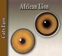 African Lion Eyes