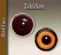 Tohickon Bird Glass Eyes