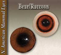 Bear - Raccoon Eyes
