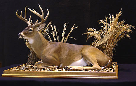 Whitetail Deer Award Winner 2003