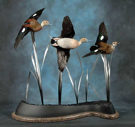 Trio Of Ring Teals Award Winner 2006
